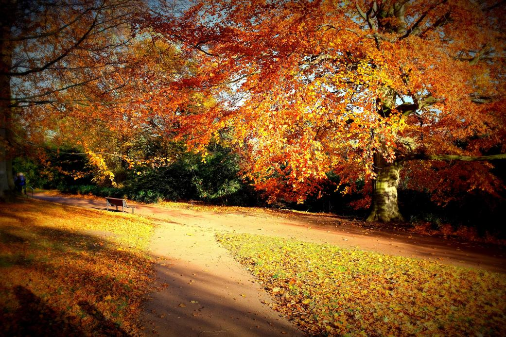 autumn_scene